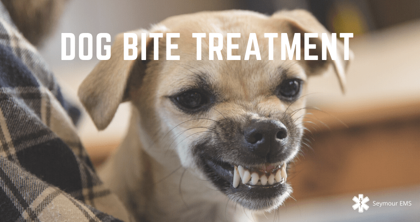 Dog Bite Treatment: 7 Essential Steps